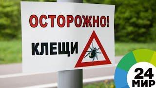 В Красноярском крае людей атакуют клещи - МИР 24