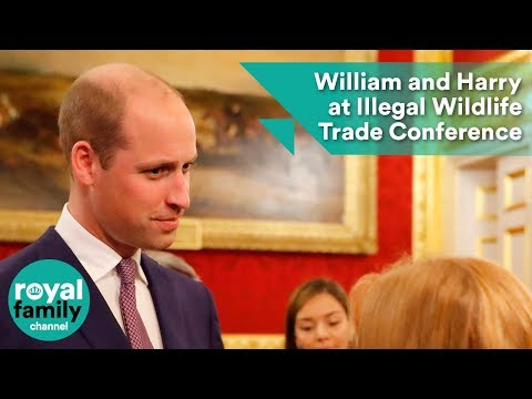 Prince William and Prince Harry attend Illegal Wildlife Trade Conference reception