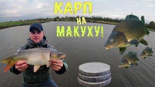 Ловля карпа на Макуху Как наловить много рыбы