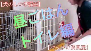 犬の昼ごはん、トイレのしつけ方の動画です ☆ペットに安全安心な消臭剤 ...
