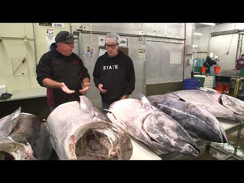 Different Grades Of Tuna At The Fish Market
