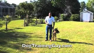 E- Collar Training With 6 Month Old German Shepherd Puppy
