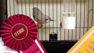West Coast Zebra & Society Show   Std Zebra Finch