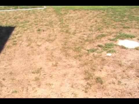Turn Brown Grass To Green Grass Youtube