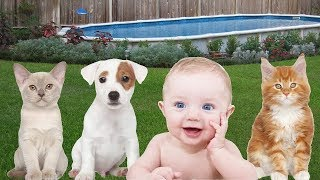 Funny People Vs Animals Compilation 😂 Will Make You Laugh 999%