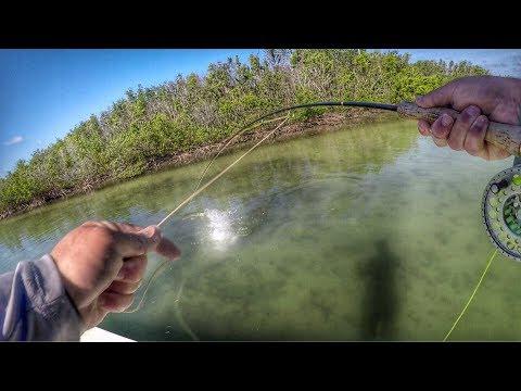 HUGE!! Fish Destroys Fly Beside Boat! In Florida.
