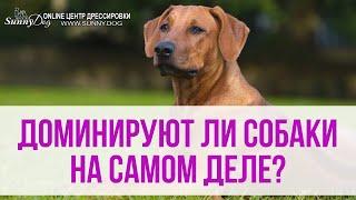 Доминируют ли собаки на самом деле? Нужно ли быть лидером?