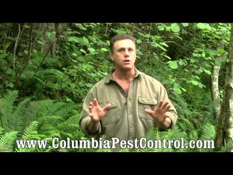 how-to-safely-use-pesticides-for-pest-control