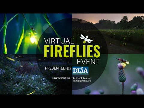 Watch Fireflies Flicker From The Comfort Of Home Smart News