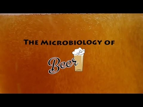 The Microbiology of Beer - Microbes After Hours