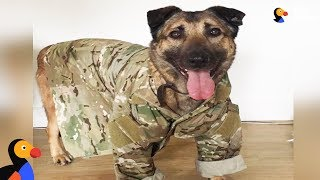 'Dangerous' Military Dog Just Wants To Cuddle Now | The Dodo