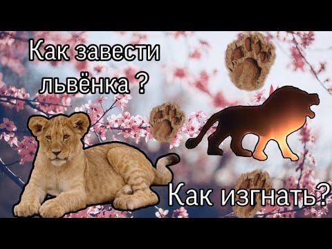 |LEO| 🦁Как завести львёнка/Как изгнать?🦁 Ultimate Lion Simulator 2