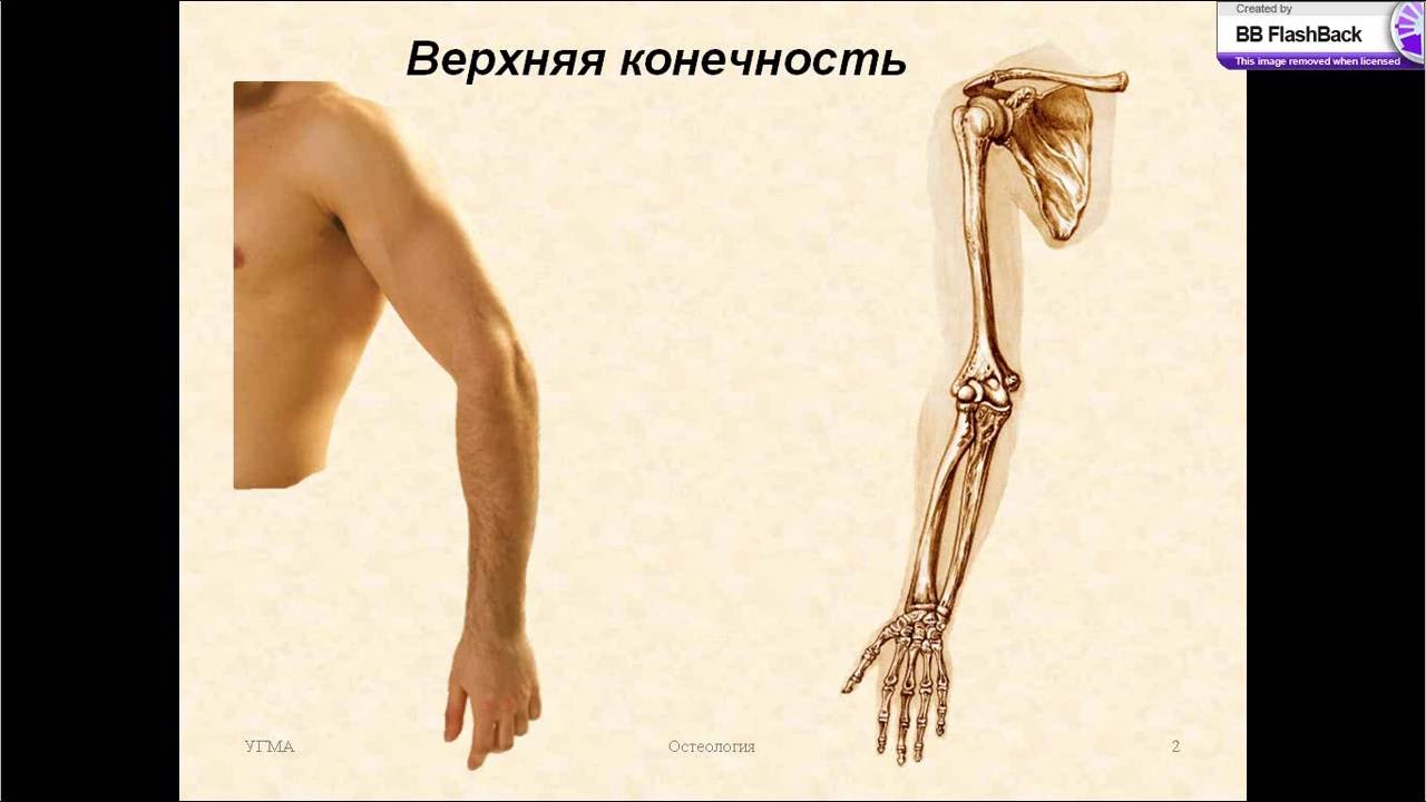 Операции на костях и суставах конечностей видео настойки на самогоне для суставов