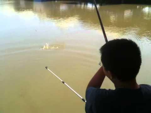 Hoàng Anh câu cá mè to