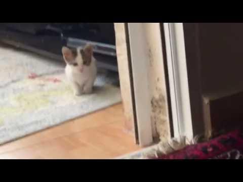 Lol mad kitten jumps at the camera