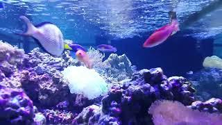 海水魚的世界海水魚缸的景象