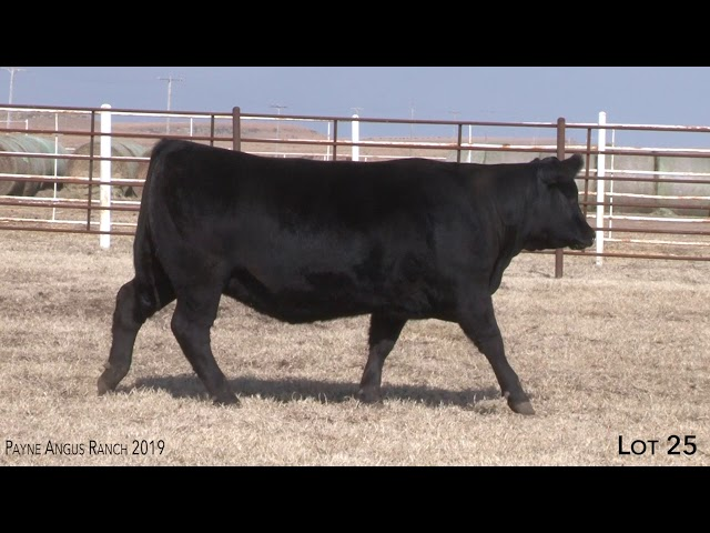 Payne Angus Ranch Lot 25