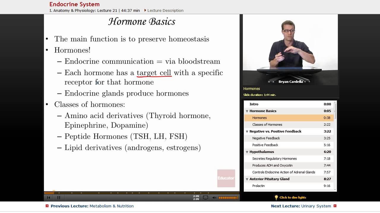 Endocrine System\