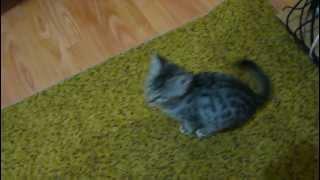 Pisic gratis! Даром котёнок!