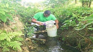 rescat-peces-guppy-de-una-laguna-que-se-est-secando