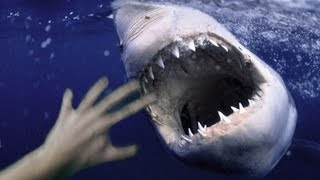 MAN FIGHTS OFF BIG SHARK - REAL OR FAKE?