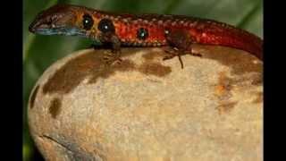 Nowe gatunki zwierząt odkryte w 2012r.