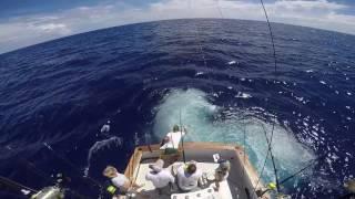 2017 Bermuda Billfish Blast | Team Overproof | Blue Marlin