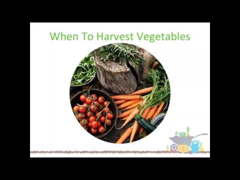 Chartwells Eat. Learn. Live. and Grow Webinar: Harvesting the Most from your School Garden