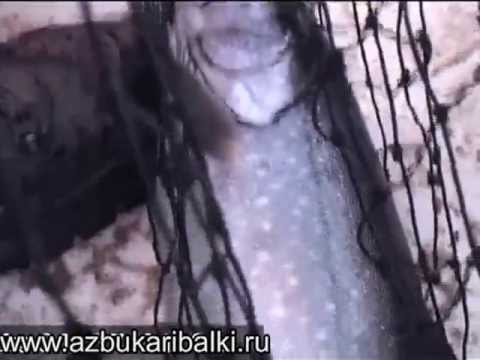 Рыбалка по  Карельски. Троллинг ловля палии.