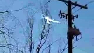 Electric Arc Between Powerlines