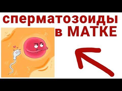 Сколько Живут СПЕРМАТОЗОИДЫ в МАТКЕ? Сколько ЖИВ Сперматозоид в Женщине?