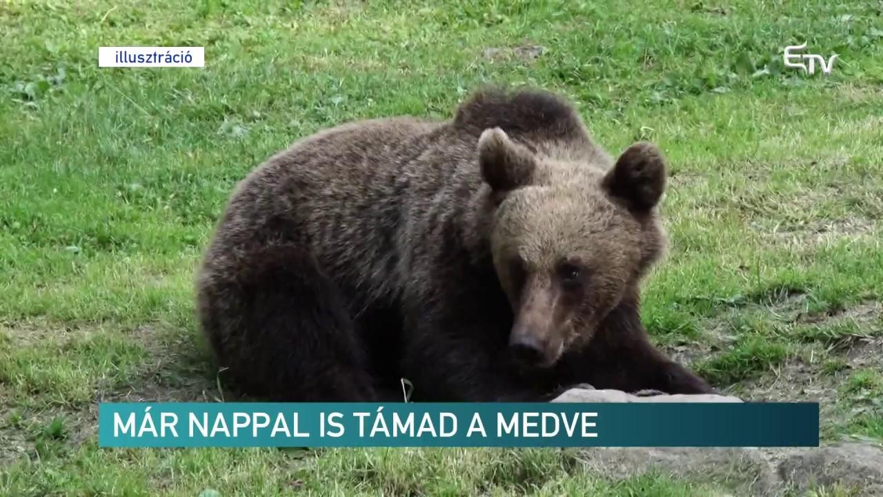 kezelje a medve ízületét)