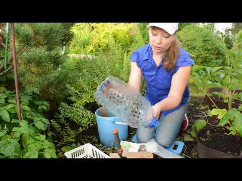 Как посадить рябчики осенью