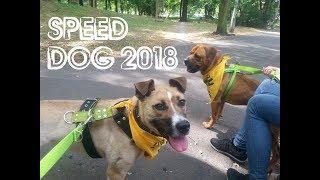 Speed Dog Kraków 2018 - Bary i Apacz