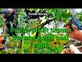 Suara Pikat Semua Burung Kecil Anti Zonk Boleh Di Coba  Mp3 - Mp4 Download