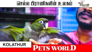 All Birds For sale | Pets for sale | செல்லப்பிராணிகளை வளர்க்கும் முறை |Oor Naattan