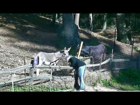 Donkeys outside again with cp Lee visiting them am 10122017