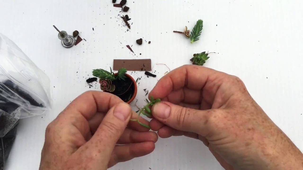 How To Make A Miniature Succulent Garden Or Tiny Mini For Your Fairy