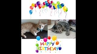 Cats First Birthday Party| Happy Birthday Lingling and Mingming