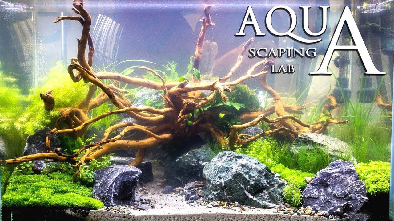 Aquascaping Contest Show Petsfestival Aquarium set 2015 by ...