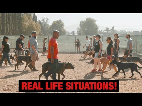 Dog Training - How to train your dog for Real life Situations! #dogtraining