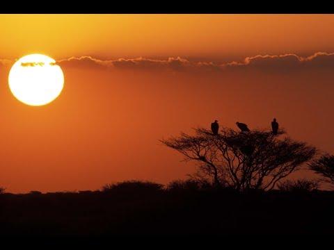 Mahazat as-Sayd - Rebirth of Arabian Wildlife (English)