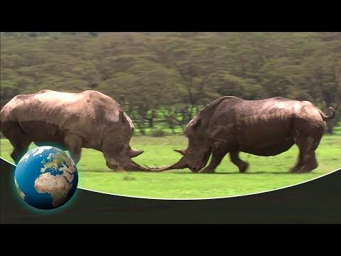 Kenya: Safari through the land of the rhinos