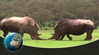 Download Kenya - Safari through the land of the rhinos