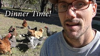 More FREE Chicken Food - A Cool Farm Walk