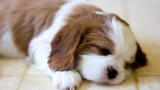 Cute Dogs Ever  Dogs are Awesome  Cut Puppy