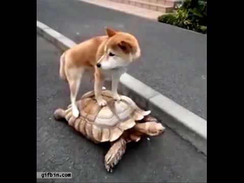 犬のおもしろ動画・画像【ペットメディアLotty( …