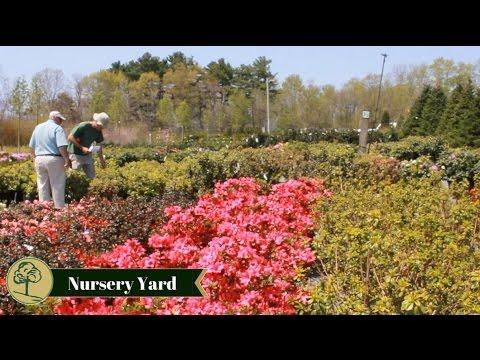 Northeast Nursery Garden Center