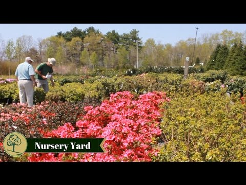 Northeast Nursery Garden Center