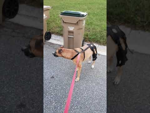 Review for Orthodog Cruciate Care Knee Brace For Dogs